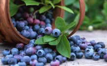 b_a-basket-of-blueberries